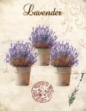 Obraz na plátně-lavender