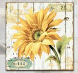 Skleněný obraz-slunečnice