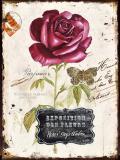 Obraz na plátně-růže