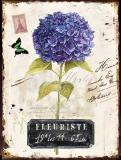 Obraz na plátně-hortenzie