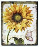Obraz na plátně-slunečnice