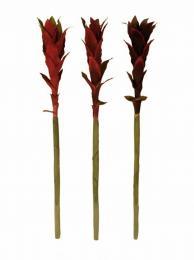 Květ dlouhý - zvětšit obrázek