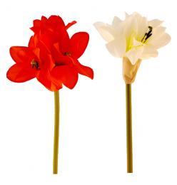 Květ-amarylis - zvětšit obrázek