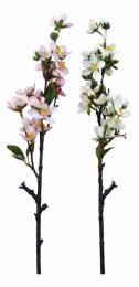 Květ-třešeň - zvětšit obrázek