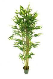 Bambus - zvětšit obrázek