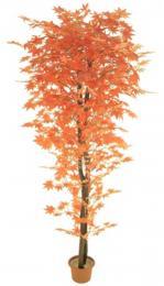 Podzim-javor - zvětšit obrázek