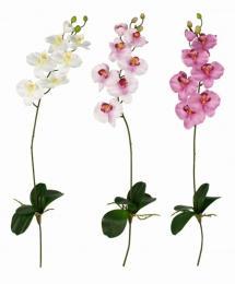Květ-orchidea s kořeny - zvětšit obrázek