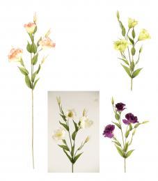 Květ-eustoma - zvětšit obrázek