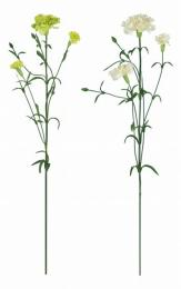 Květ-minikarafiát - zvětšit obrázek