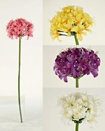 Květ - zvětšit obrázek
