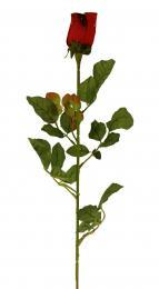 Květ-růže - zvětšit obrázek