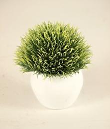 Echimus-zelená - zvětšit obrázek