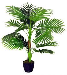 Palma areca - zvětšit obrázek
