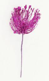 Vánoční květ-fialová - zvětšit obrázek