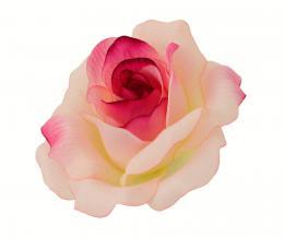 Růže, 12ks - zvětšit obrázek